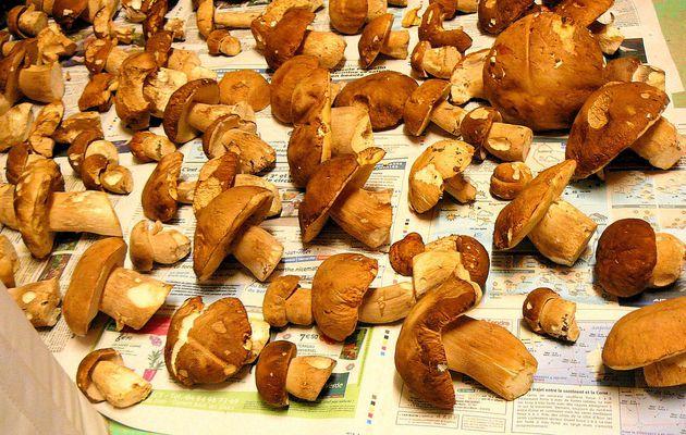 Cèpes panés.