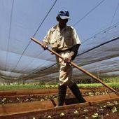 Un projet de Cuba et des agences de l'ONU pour le développement durable de l'agriculture - Analyse communiste internationale