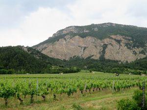Vues générales du vignoble et des cabanons de vigne