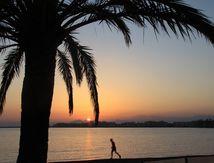 Coucher de soleil sous le palmier Rosa Espagne_16