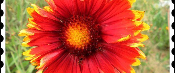 A fleur d'âme ...