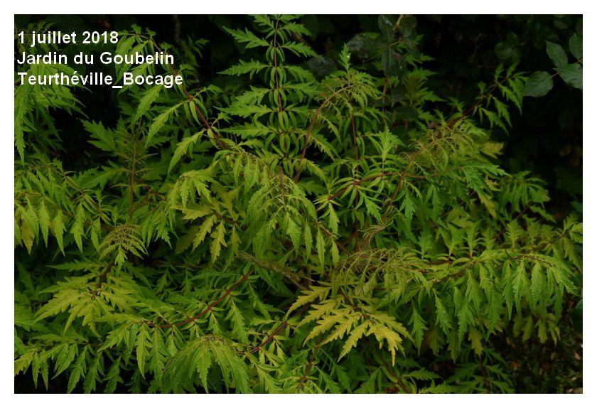 Teurthéville-Bocage : visite d'un jardin