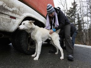 Mr. X and Morrison, leader from Fairbanks to Nome.   Emeraude during the vet. check. Photos Jeff Schultz