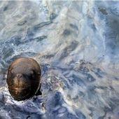 Les multinationales détruisent la planète! Pollution des mers en toute impunité.