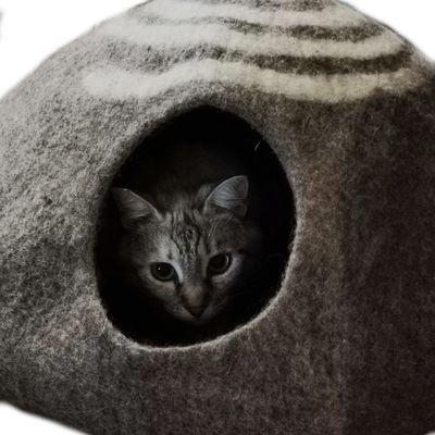Coté Chat