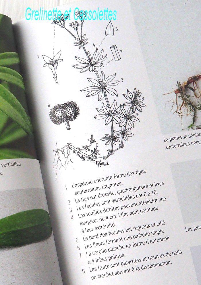 Plantes Sauvages Médicinales, les 50 plantes essentielles et leurs usages