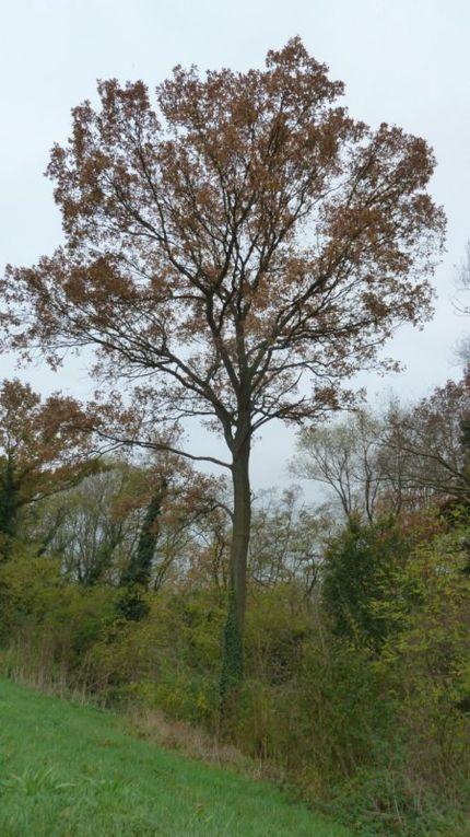 les arbres se dépouillent mais restent très beaux!