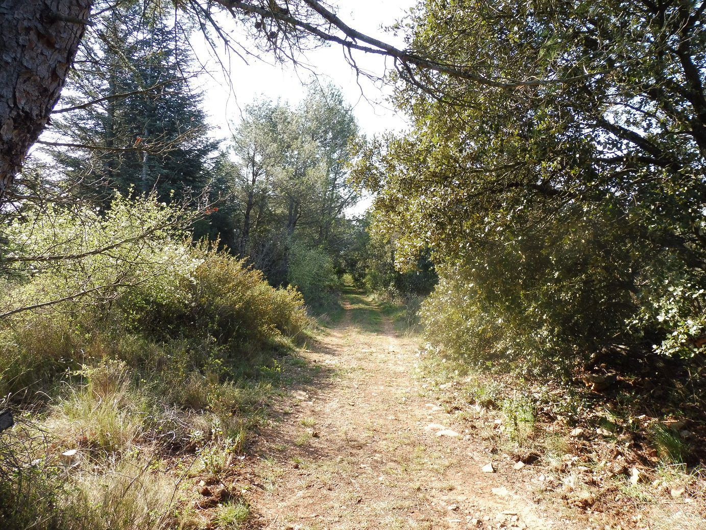Randonnée dans la forêt de Rochefort (30).