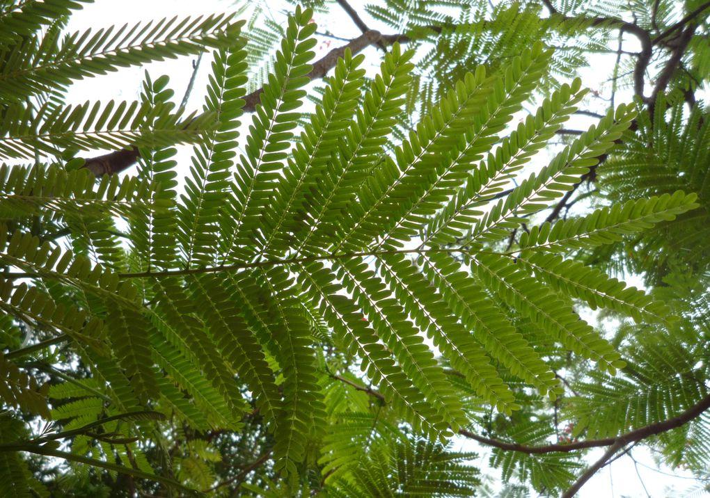 Album - Plantes