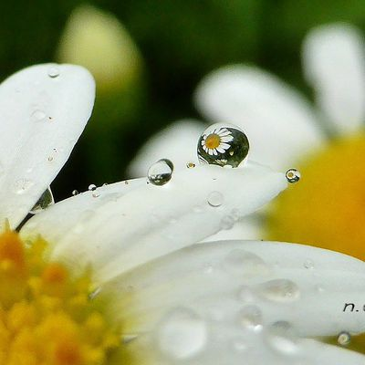 Gouttes de pluie incrustées de fleurs aux couleurs de l'été