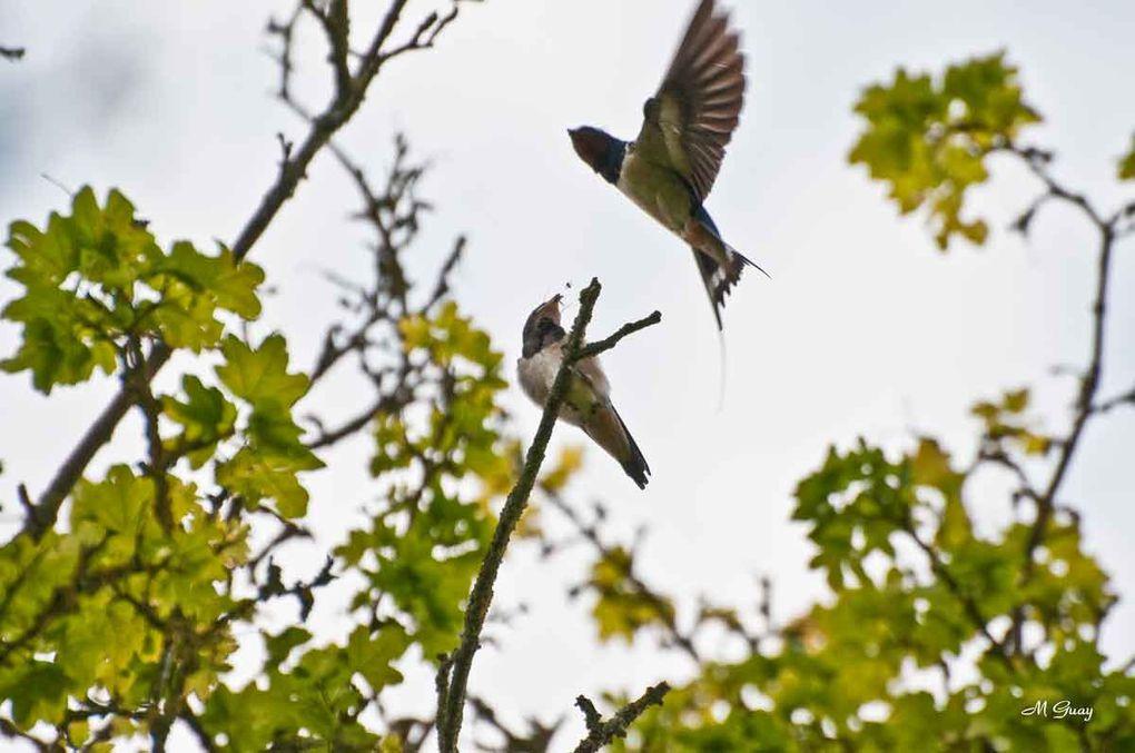 Photos des petits oiseaux des bois, des champs, des jardins pris dans mon environnement proche soit le Sud de l'Aisne.