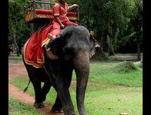 L'éléphant de Siem Reap