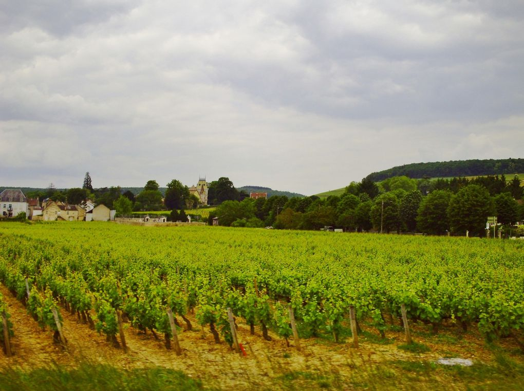 DIAPORAMA 13 PHOTOS - DES VIGNES ON A VU.QUE DU BOURGOGNE EN GRAPPE
