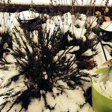 Le jardin urbain sous la neige, petit aperçu exceptionnel