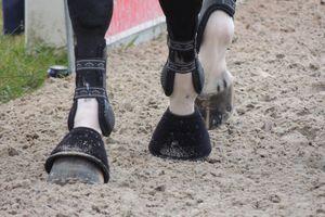 La composition biochimique du pied du cheval