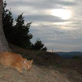 Chachou chat va être l'heure des croquettes - Ichat et compagnie