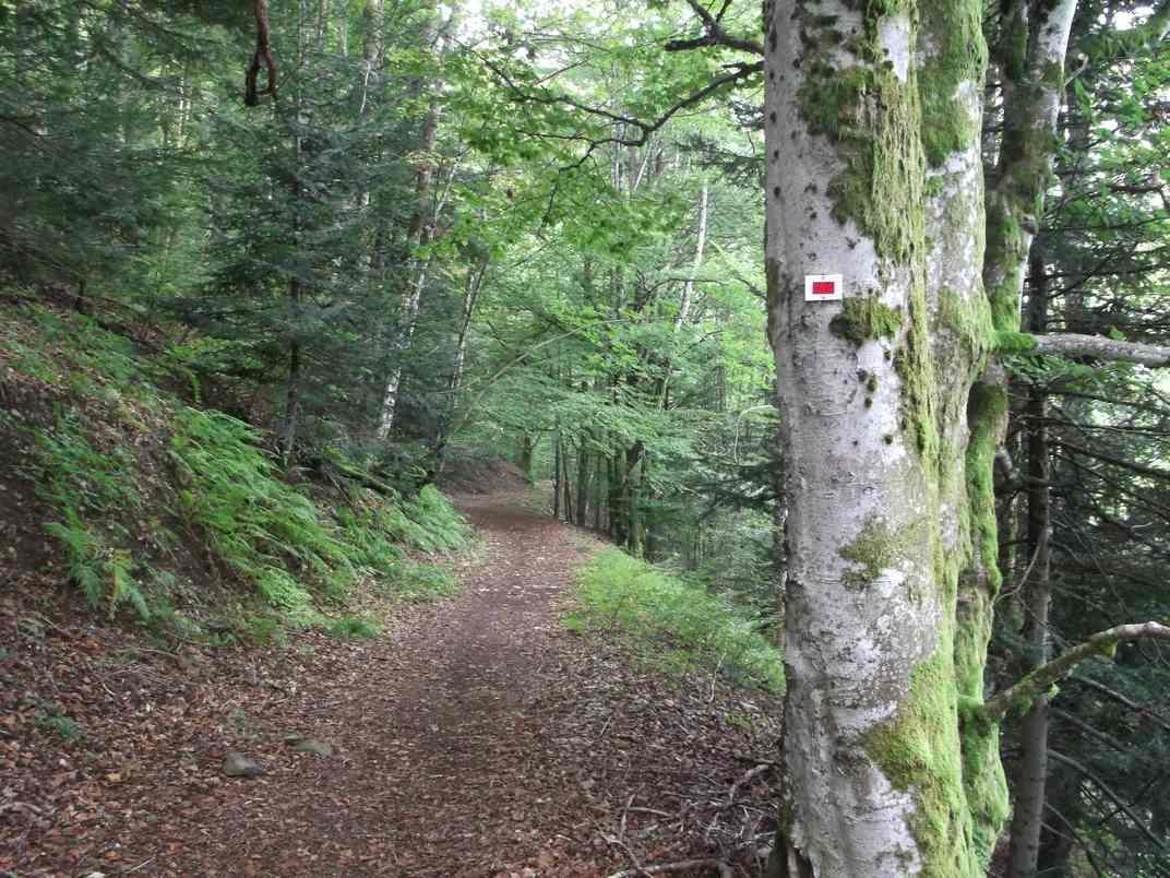 KIRCHBERG : LOCHBERG, WISSGRUT ET FENNEMATT (R 454) – 17,3 km - D+ 660 m - 5 h - 4/6