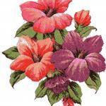 Hibiscus photo stitch free embroidery design