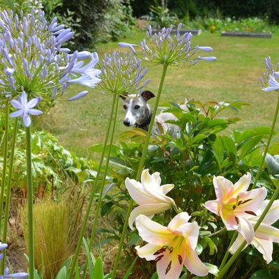 Juillet 2015 - Toujours au jardin !