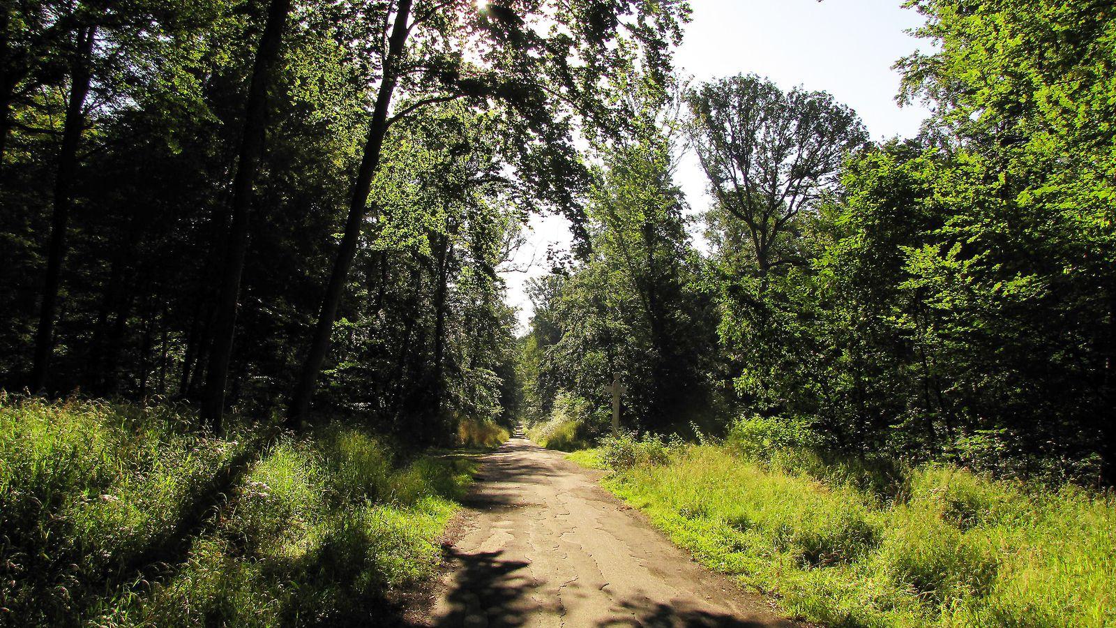 le carrefour des Larris Mathieu en forêt de Compiègne