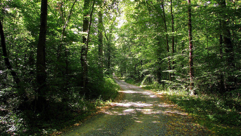 Randonnée en forêt de Compiègne_les Tournantes du Grand Parc et du Mont du Tremble