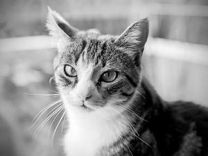 Séance photo portrait animaux / portrait chat, photographe Bordeaux