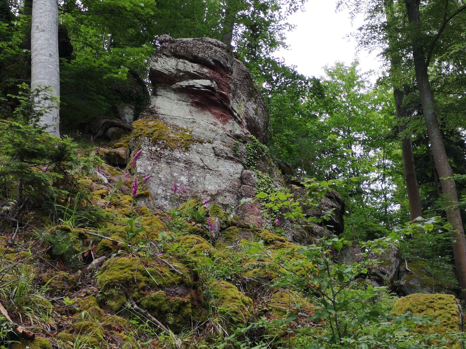 Trois châteaux sur mon circuit - Heidenschloss - Wangenbourg et Freudeneck - 07/06/2020