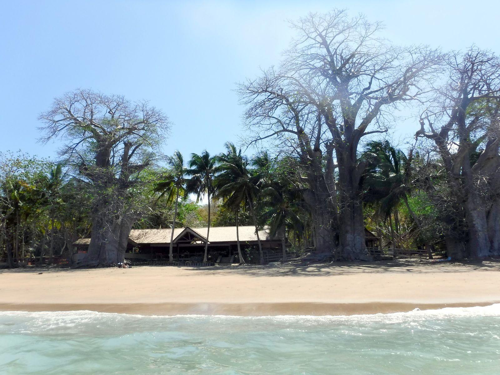 Le restaurant et les baobabs, photo Anaële