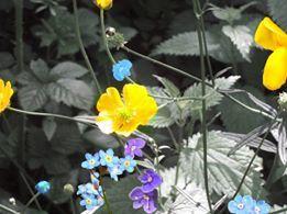Le bleu et le jaune, encore et encore; more of Blue and Yellow