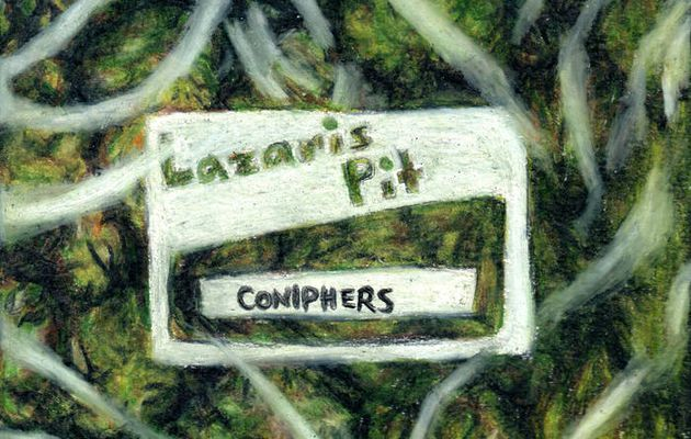 💿  Lazaris Pit - Coniphers