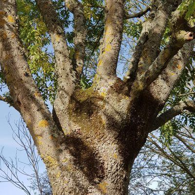 Textoésies et vous : Prière de l'arbre