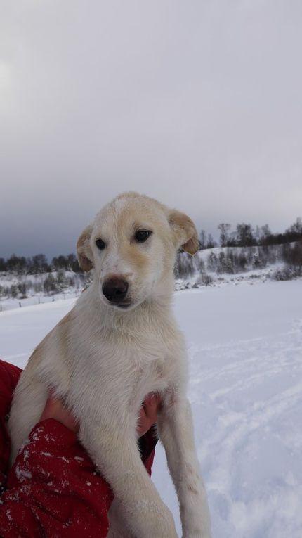 Puppies Daisy-Arctic