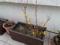 Nos Fleurs du Printemps-3-
