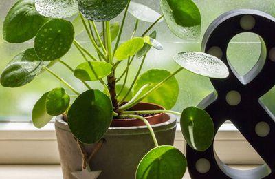 Plante gamm vert