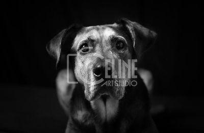 Portraits canins le 30 mars