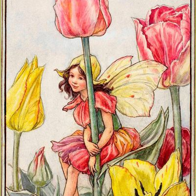 Cicely Mary Barker (1895-1973) - illustratrice - La Fée des tulipes