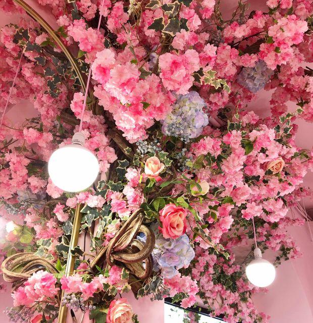 Pinky Bloom 16eme