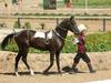 Blog sur le cheval Akhal Téké