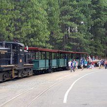 Divers - Yosemite Mountain Sugar Pine Railroad