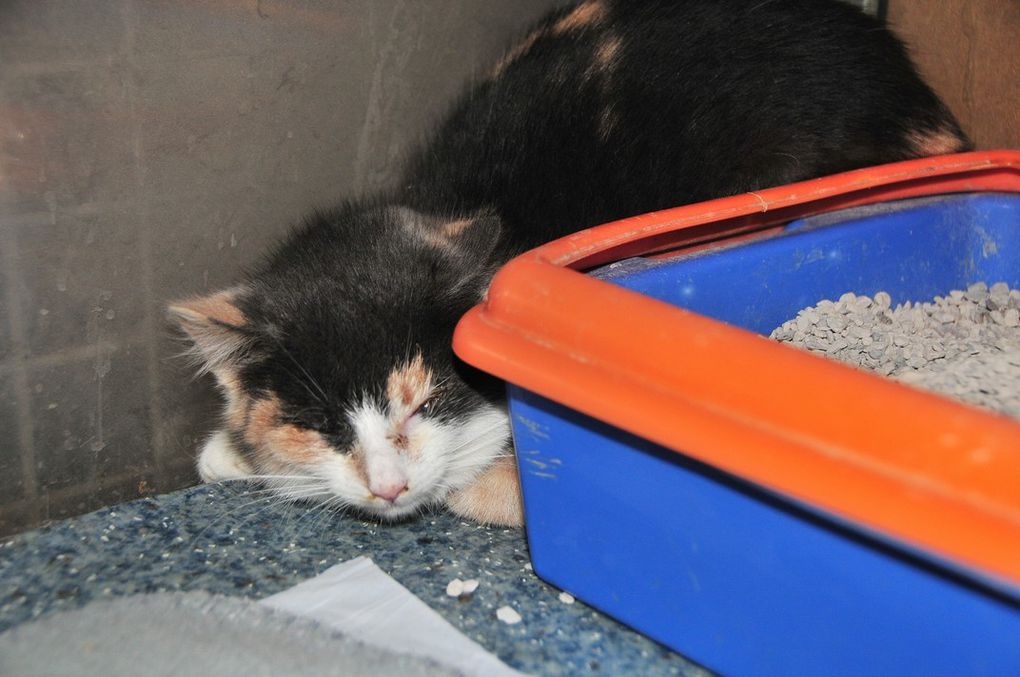 CHATONS  ADOPTES : DALLAS (LILITH) et TEXAS