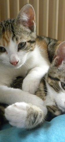 Les bêtises des chatons...