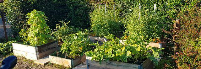 Mon jardin de fille :  Les récoltes
