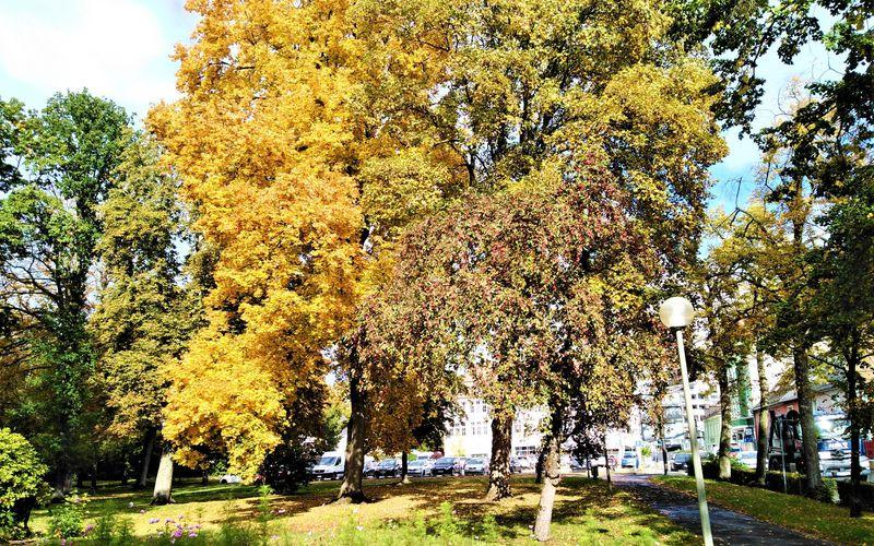 Veränderungen im Stadtpark Marktredwitz