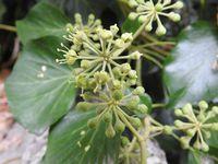 Floraison au soleil, fruits verts en automne, fruits mûrs en mars