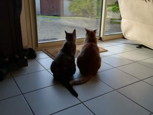 Avec Ashoka s'entendre comme bons chien et chats puis, avec Vanille regarder, ensemble dans la même direction ...