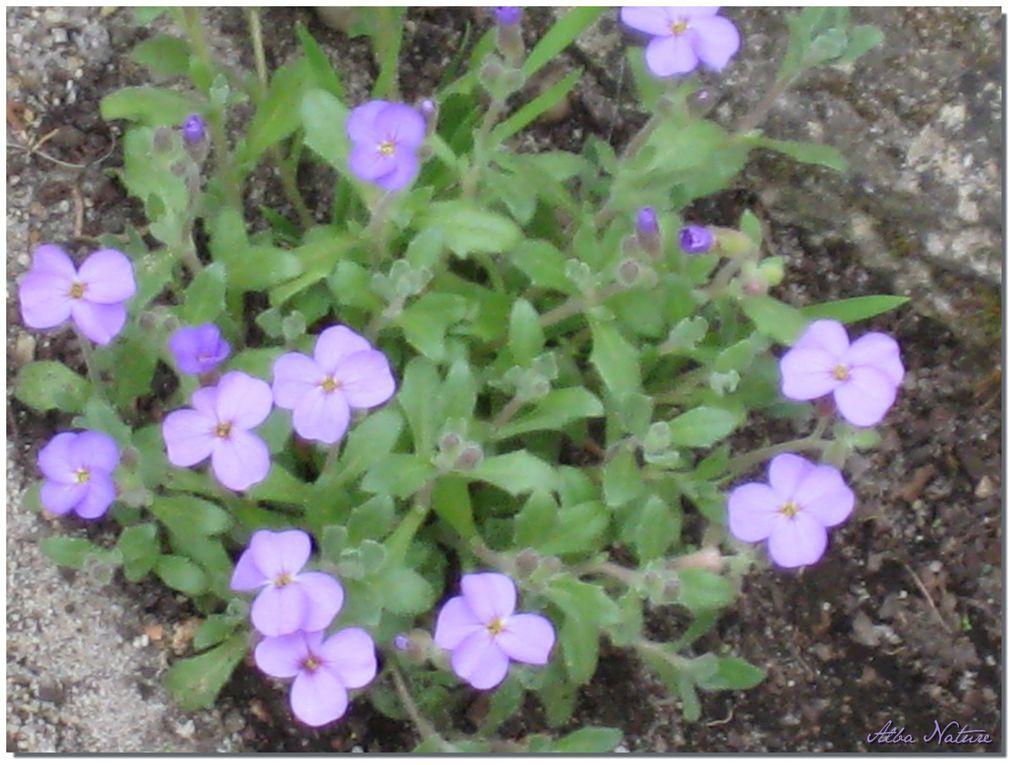 Photos du jardin 2009