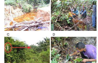 """Brésil : """"Il ne reste que la terre et le ciel"""" : Palmier à huile et impacts socio-environnementaux sur le territoire Tembé en Amazonie"""