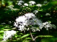 Kobe: Le jardin botanique alpin du mt Rokko