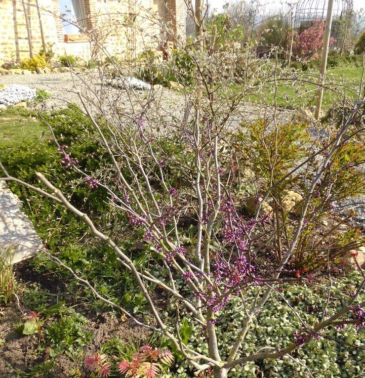 photos des fleurs du mois d'avril dans notre jardin