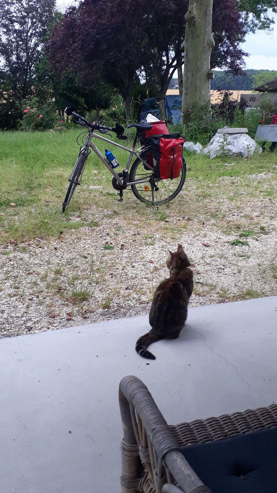 Le chat et moi on attend